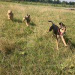 Running Dogs Beagle Cocker Spaniel French Bulldog Ttoodle